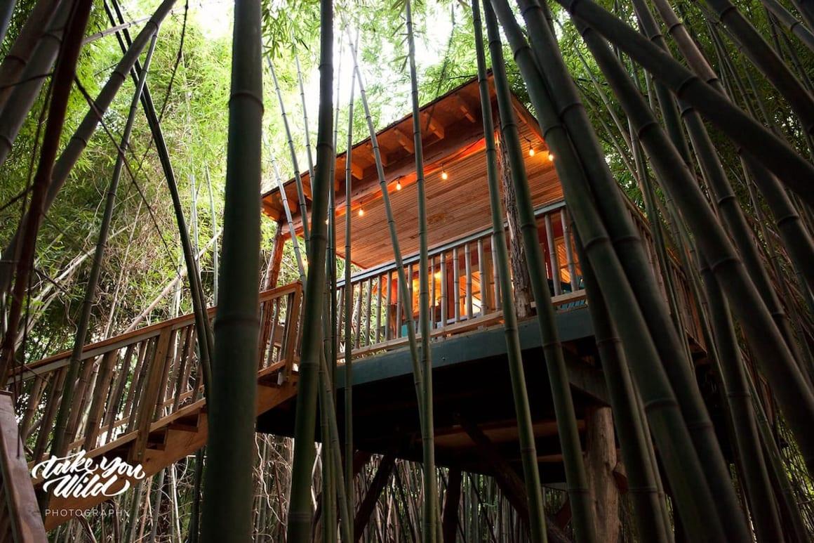 Alpaca treehouse in Bamboo forest Atlanta