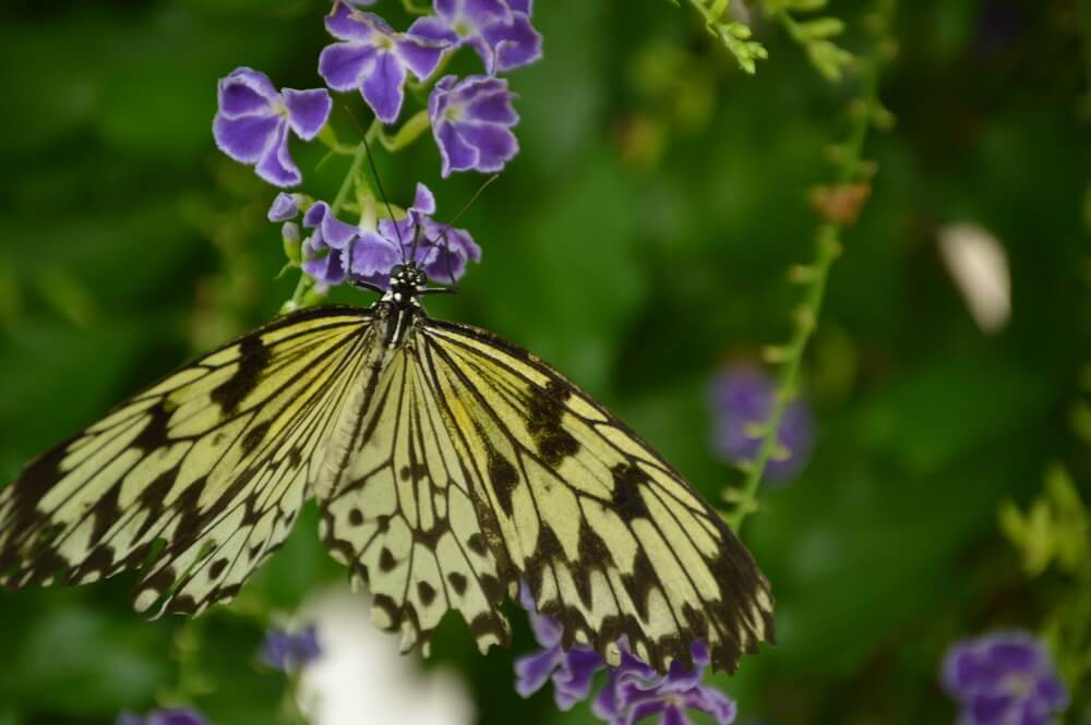 Take a Stroll Through the Butterfly Garden and Insectarium