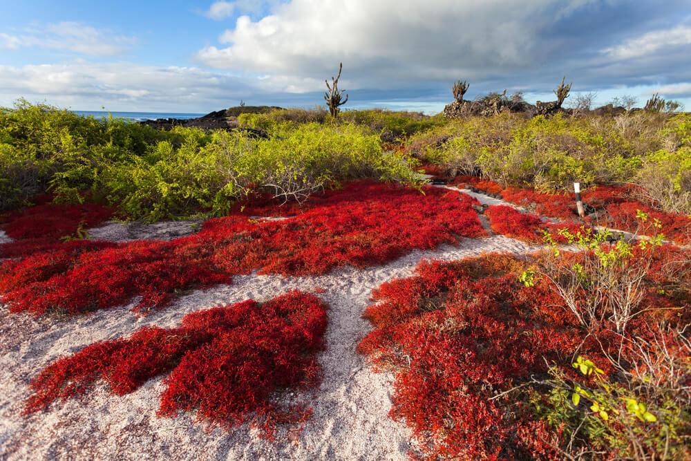 Floreana Galapagos