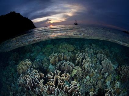 Most Epic Diving Trips for 2020