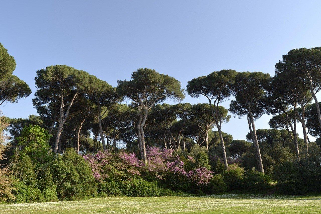 Rome in Spring