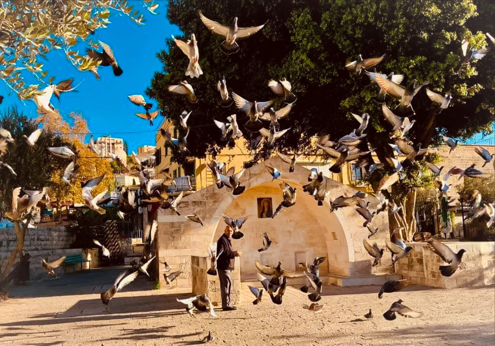 Mary's Well, Nazareth pigeons - One of my best places to visit in Israel