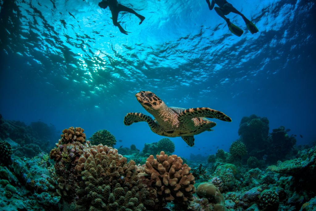 diving with sea turtles in maldives