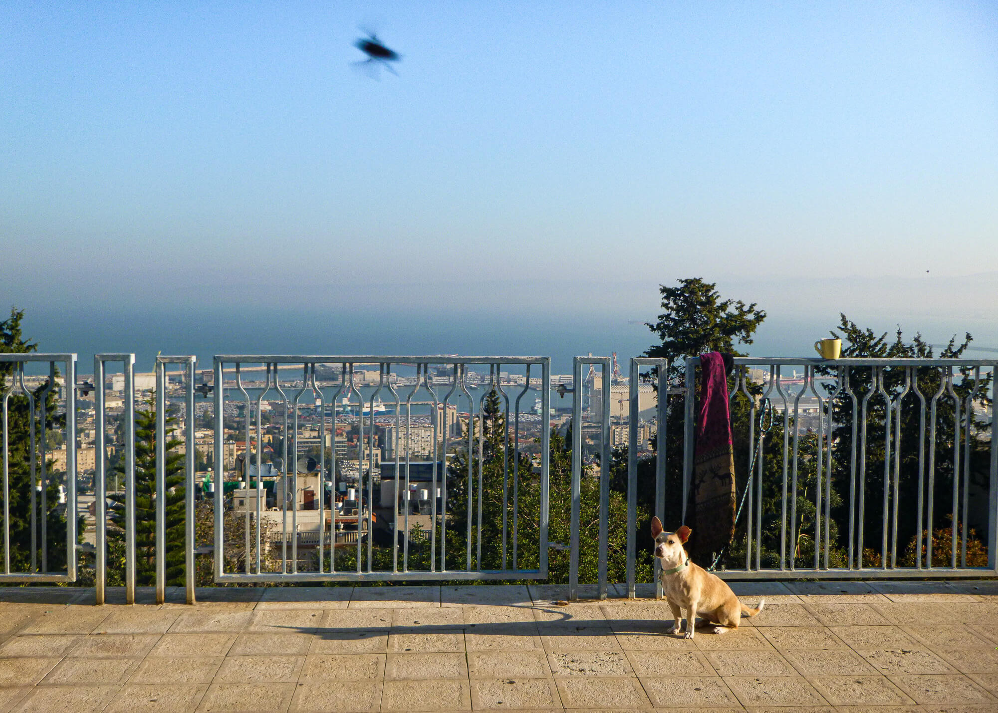 Over the Haifa port - one of my favourite destinations in Israel