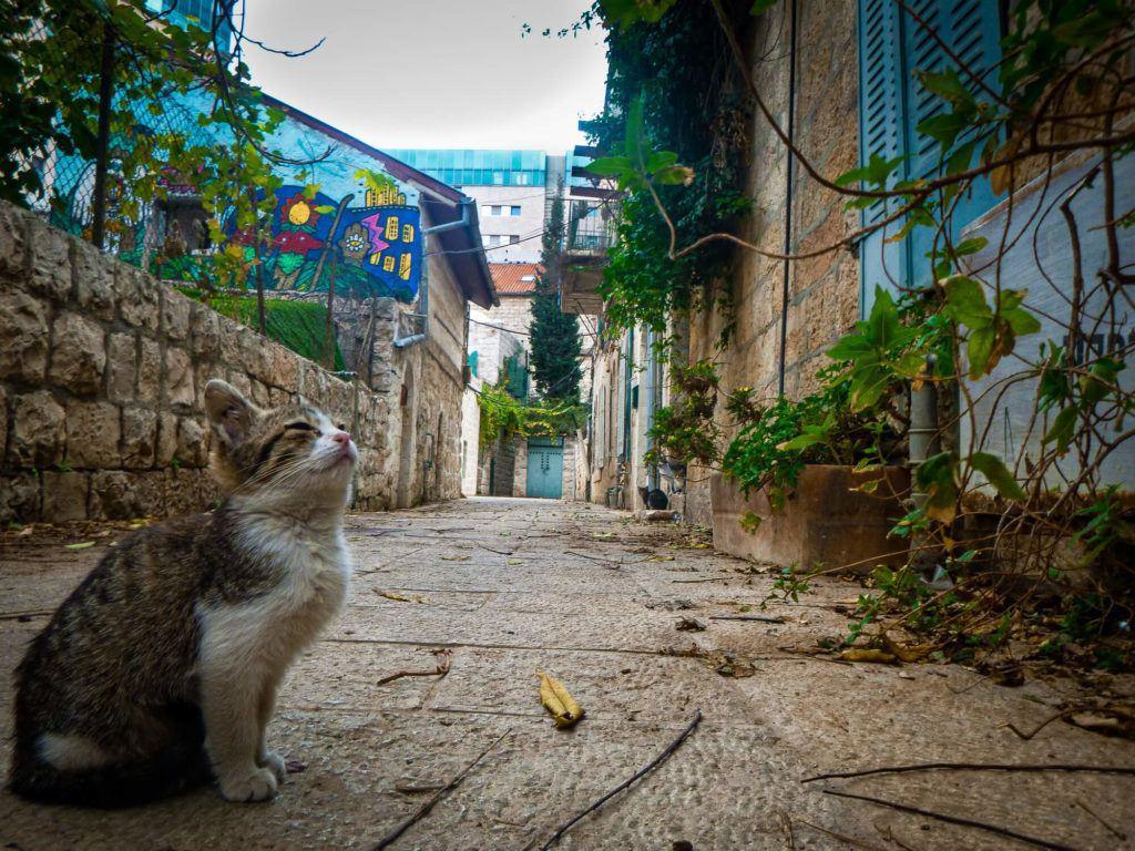 A stray cat in an old neighbourhood in Jerusalem