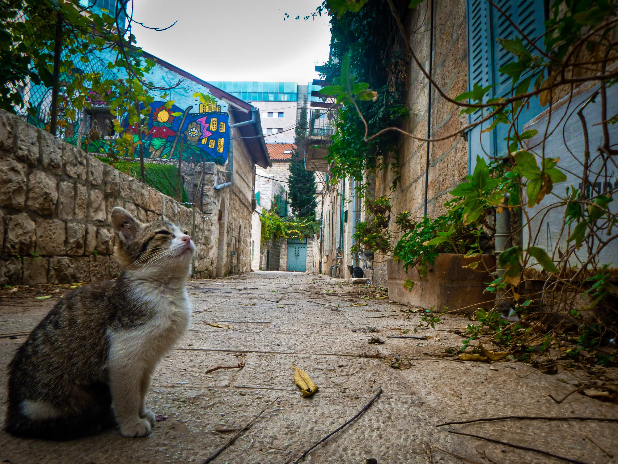 Kitty in Jerusalem - a must-pat in Israel