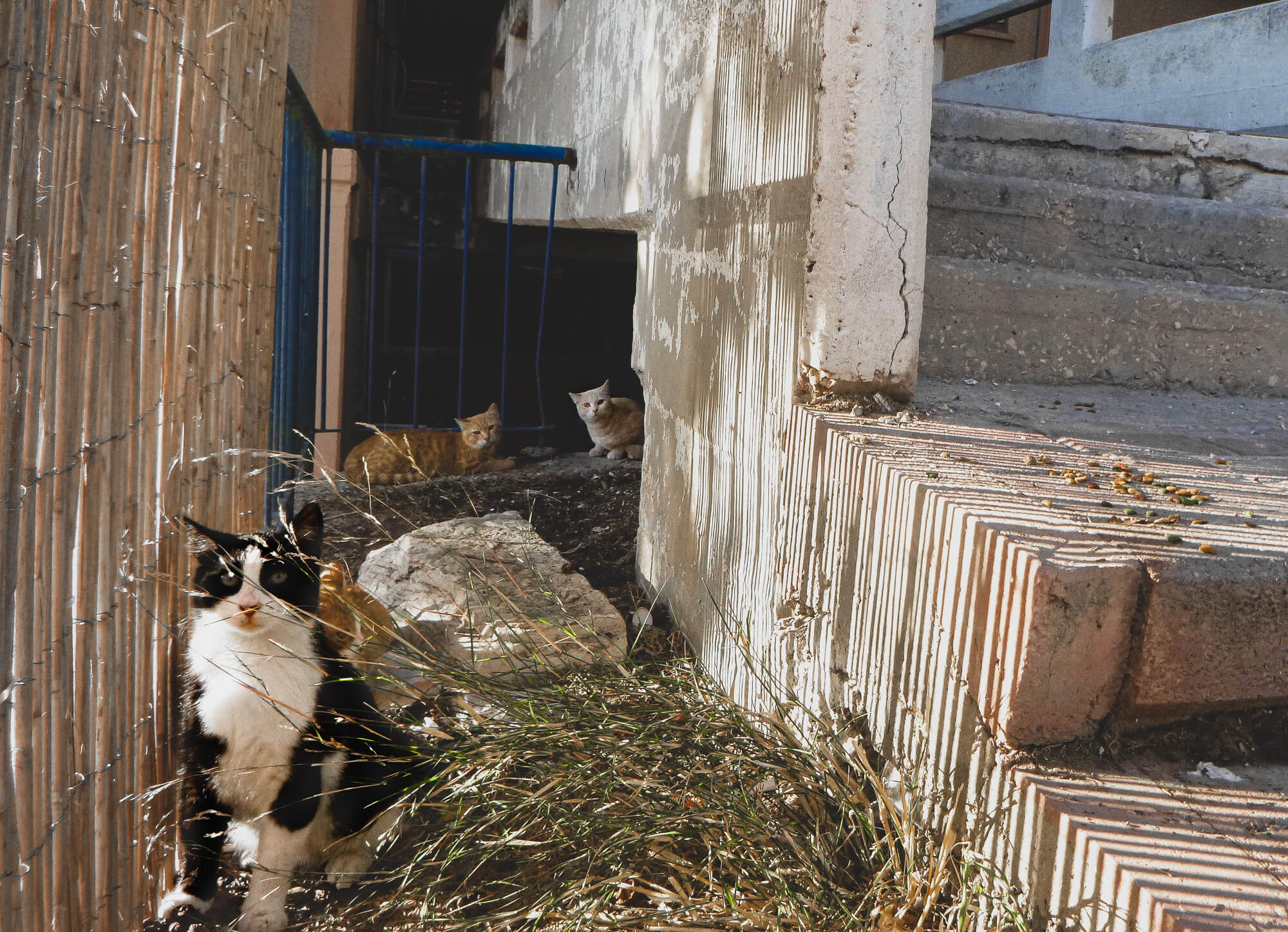 Stray cats when visiting Nazareth, Israel