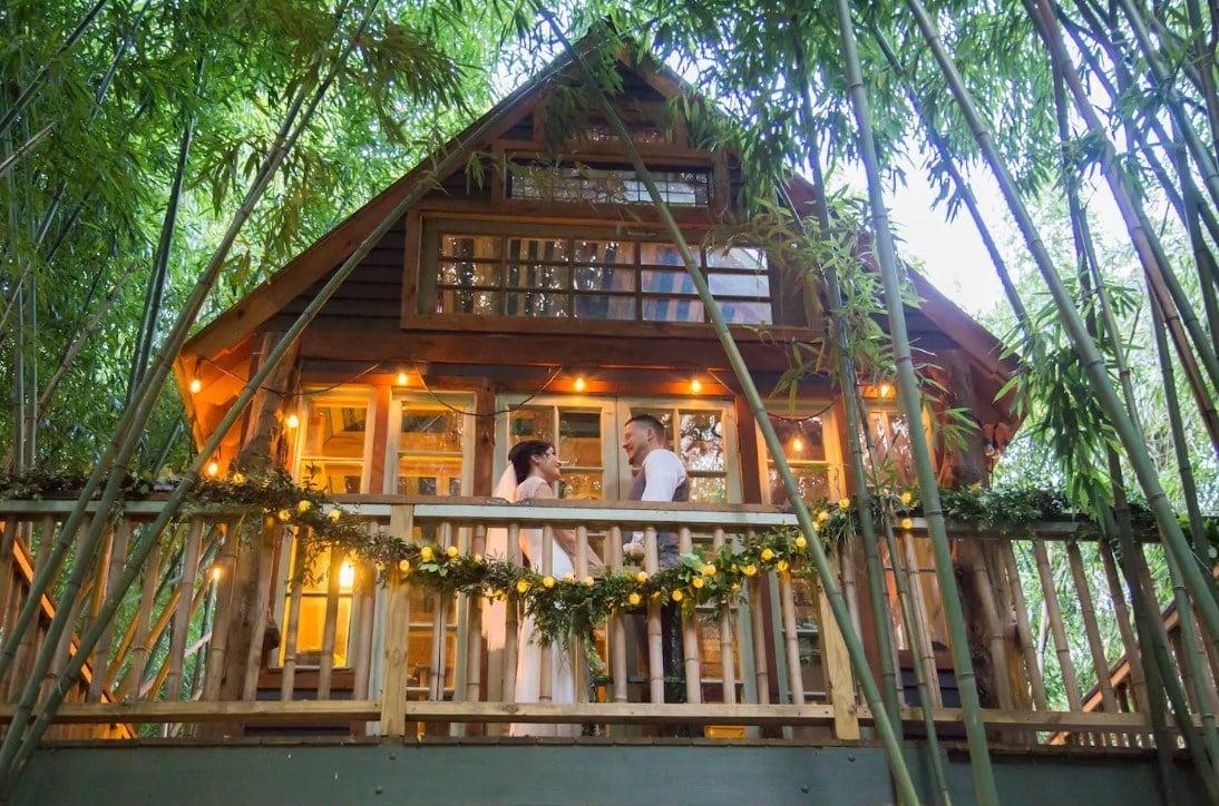 Atlanta Alpaca Treehouse