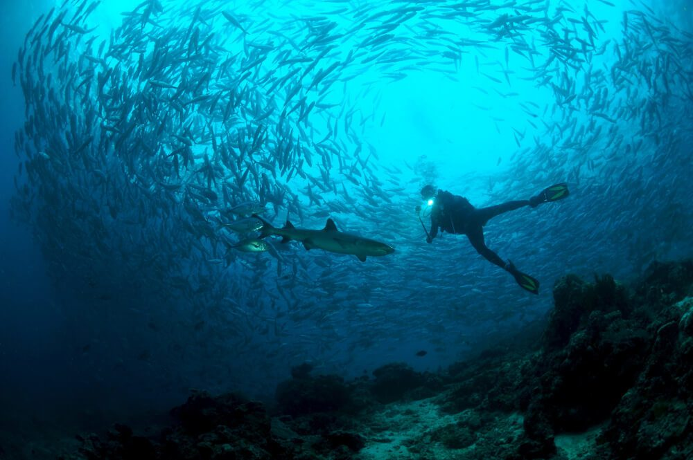 Scuba diver in Mauritius with barracudas and sharks