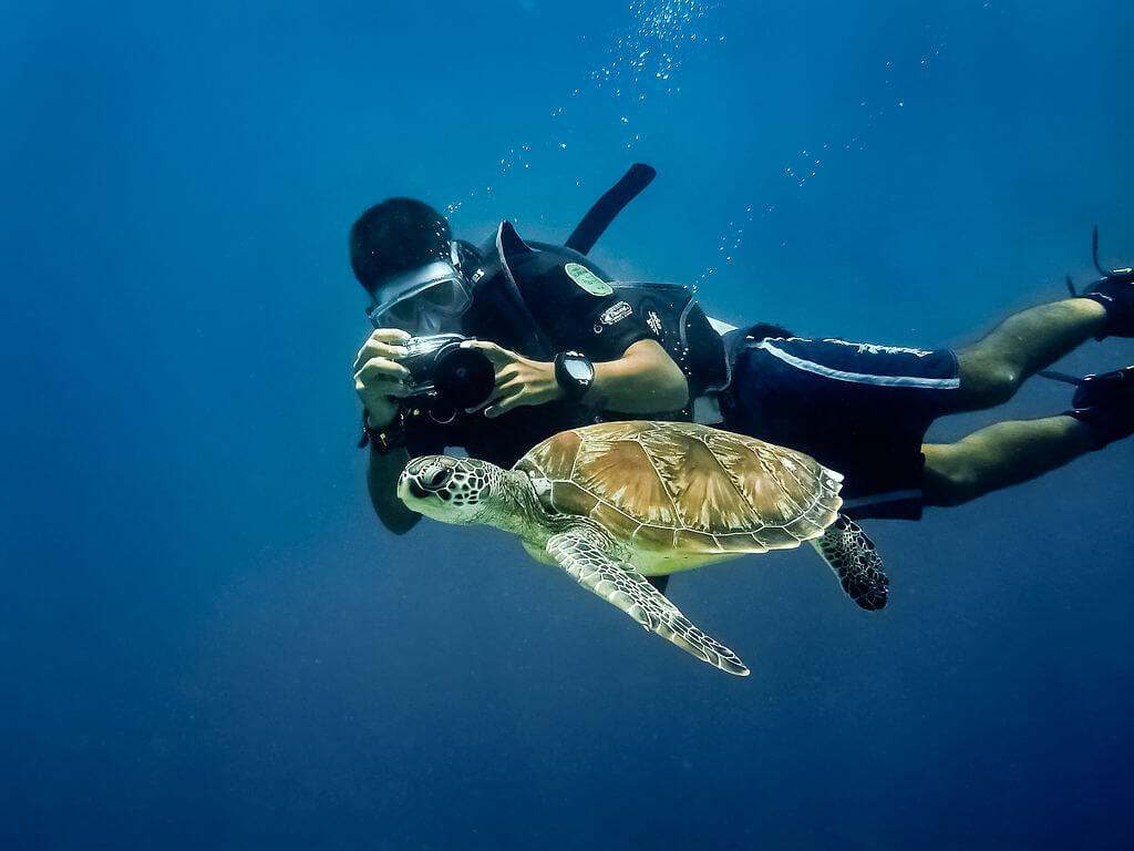 Man photographing turtle while learning with a Mauritus dive school