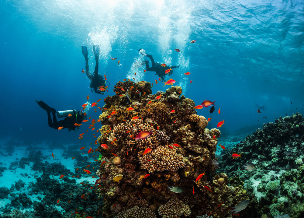 Three people scuba diving the Three Sisters site in Eilat's Red Sea