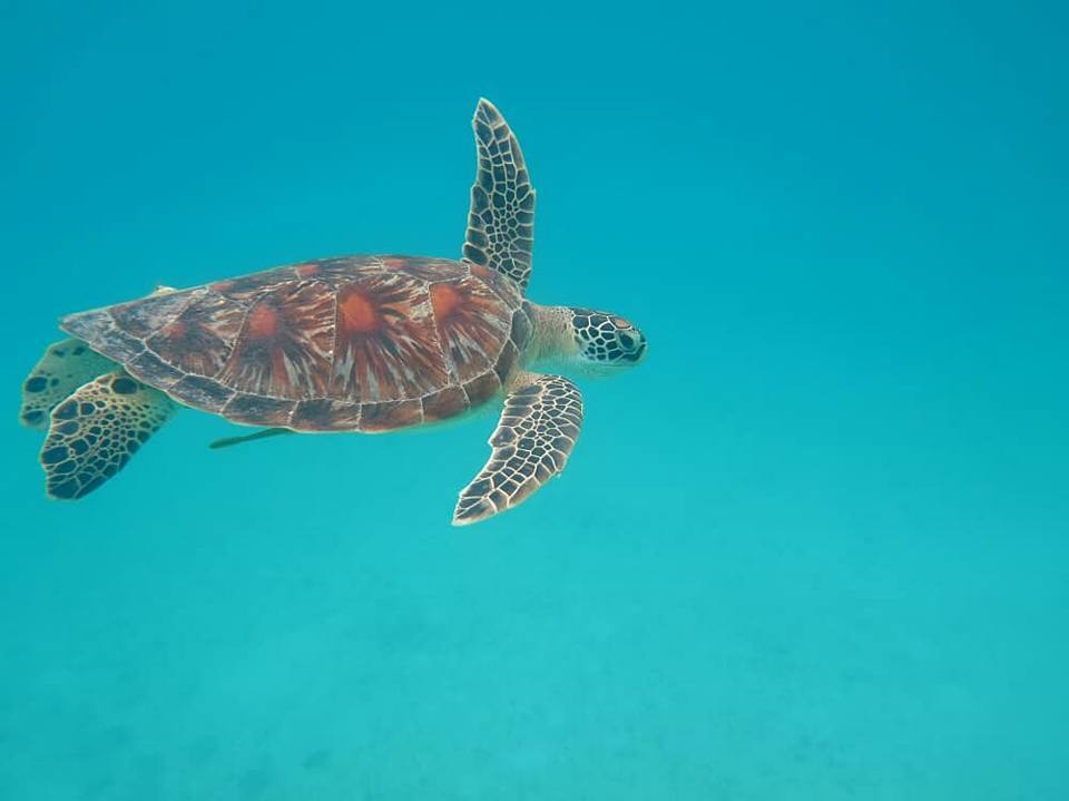 Perhentian Turtle Project