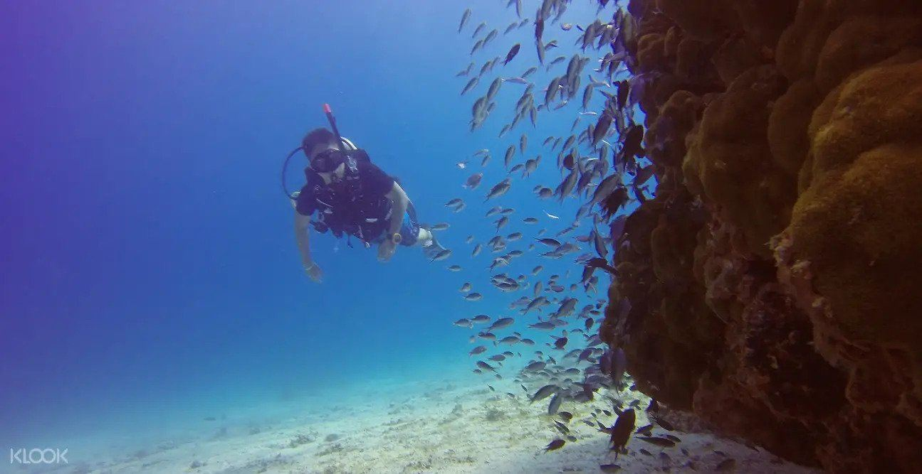 Redang Island diving