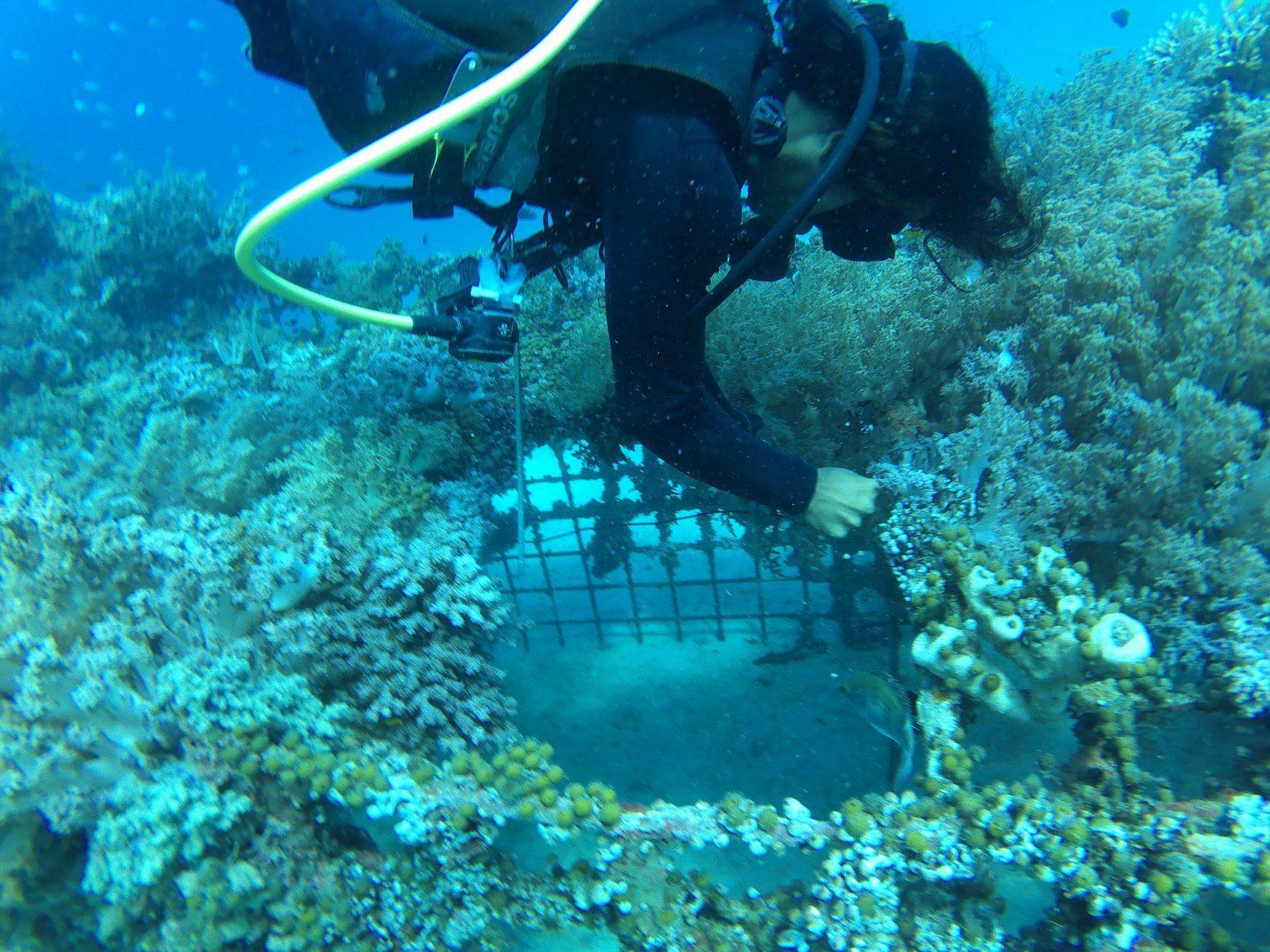 Reef Seen Bali