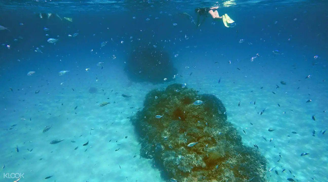Snorkeling Kerama Tokashiki Island