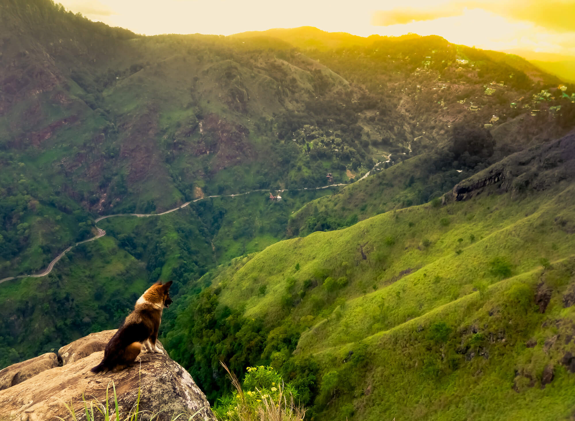 Dog examine's Sri Lanka's hill country from a beautiful viewpoint in Ella - Little Adam's Peak