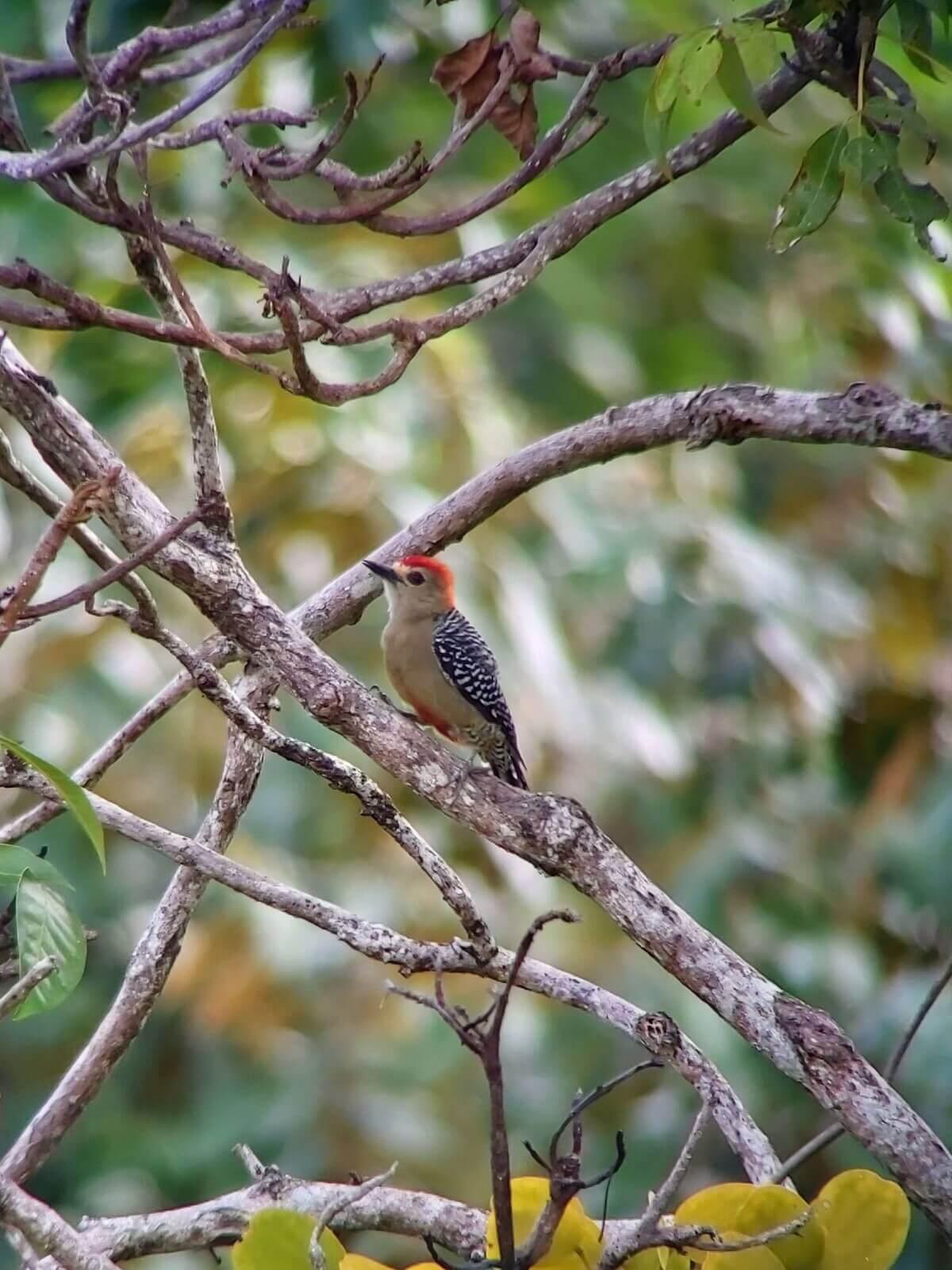 see the birds of Manuel Antonio