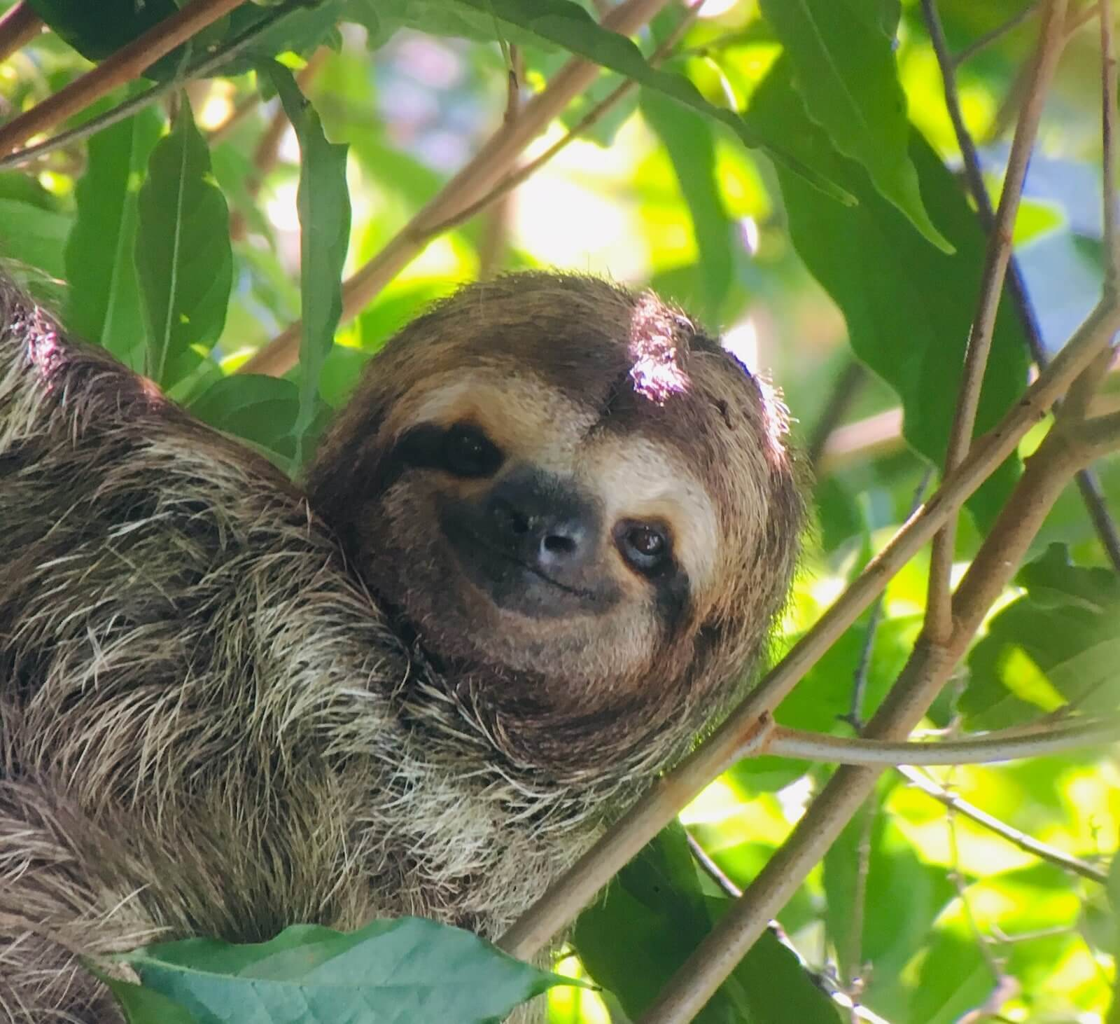 A sloth photographed during a wildlife tour in Costa Rica