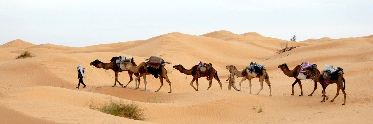 A camel caravan in Tunisia's Sahara Desert escorting tourists seeking an escape from coronavirus