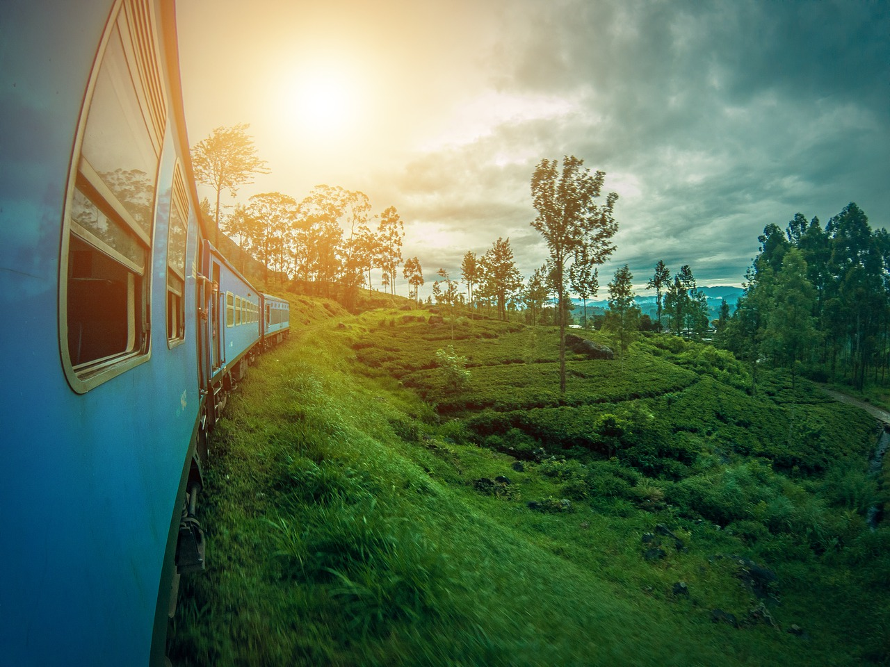A train in Sri Lanka goes through very green jungle.