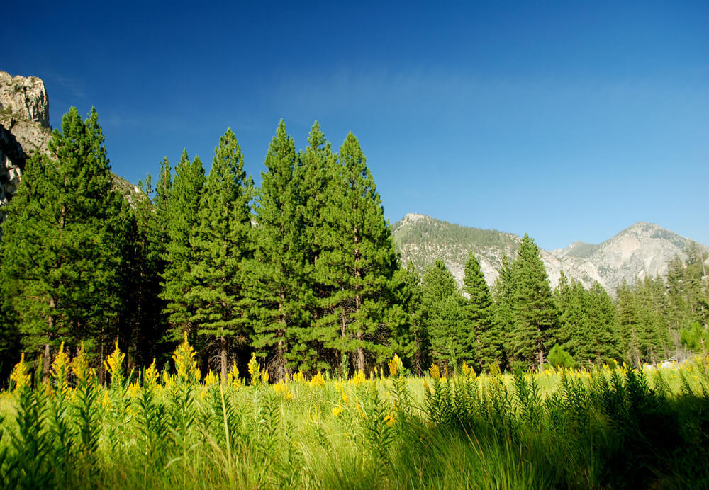 Tulare, Sequoia National Park