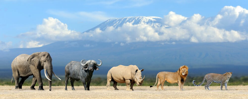 Africa's Big Five trophy animals seen from a safari