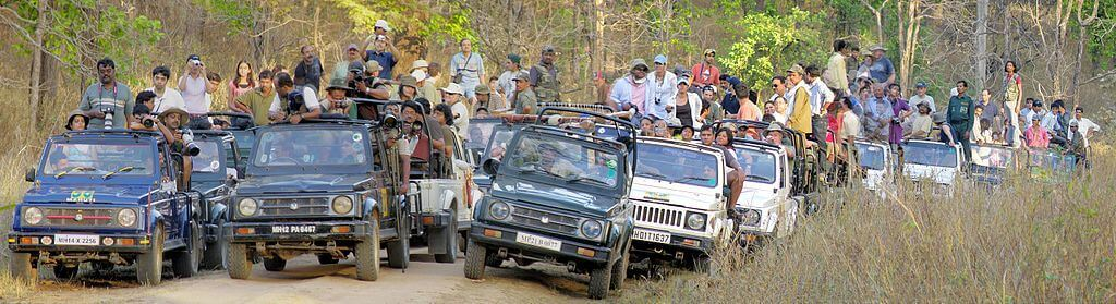 A crowded safari convoy stopped in Kanha National Park - wildlife tourism in India