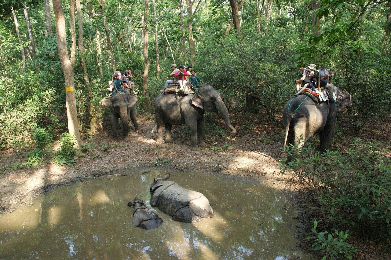 An elephant safari in Nepal displaying animal abuse in tourism