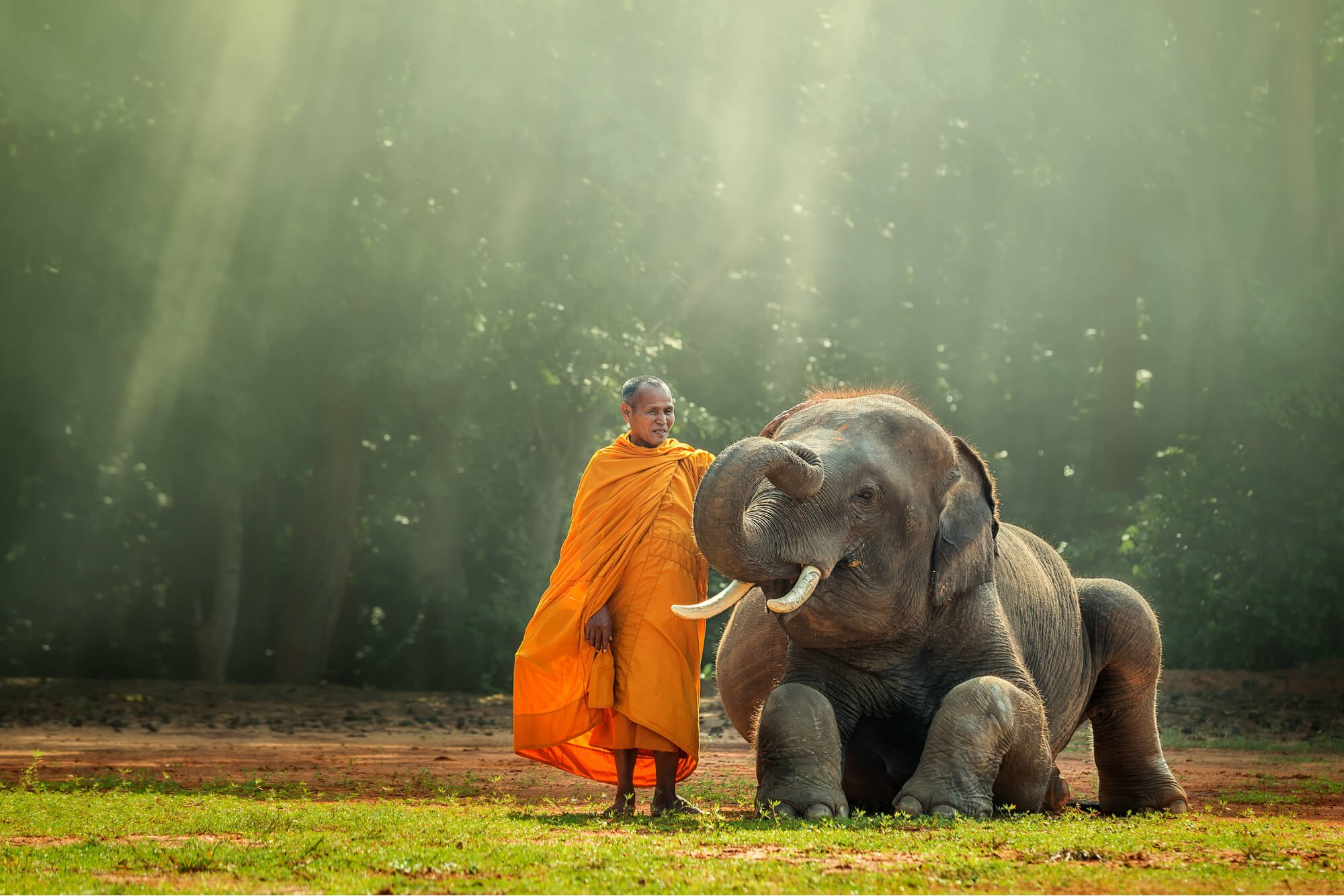 Monk at an elephant sanctuary in Thailand patting a baby