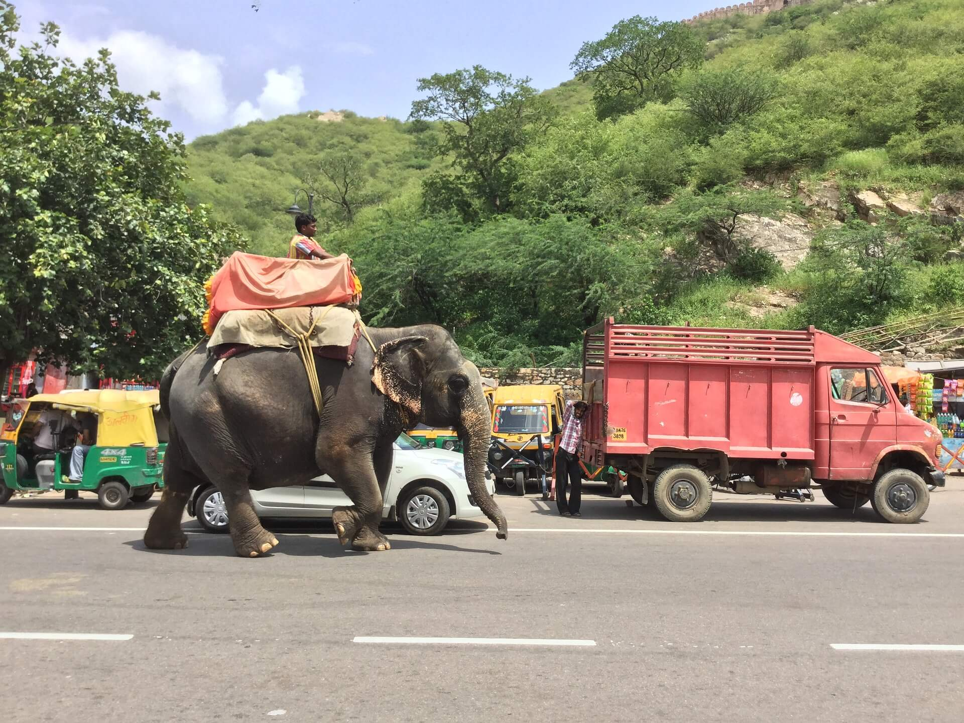 A man riding an elephant in India in a howdah