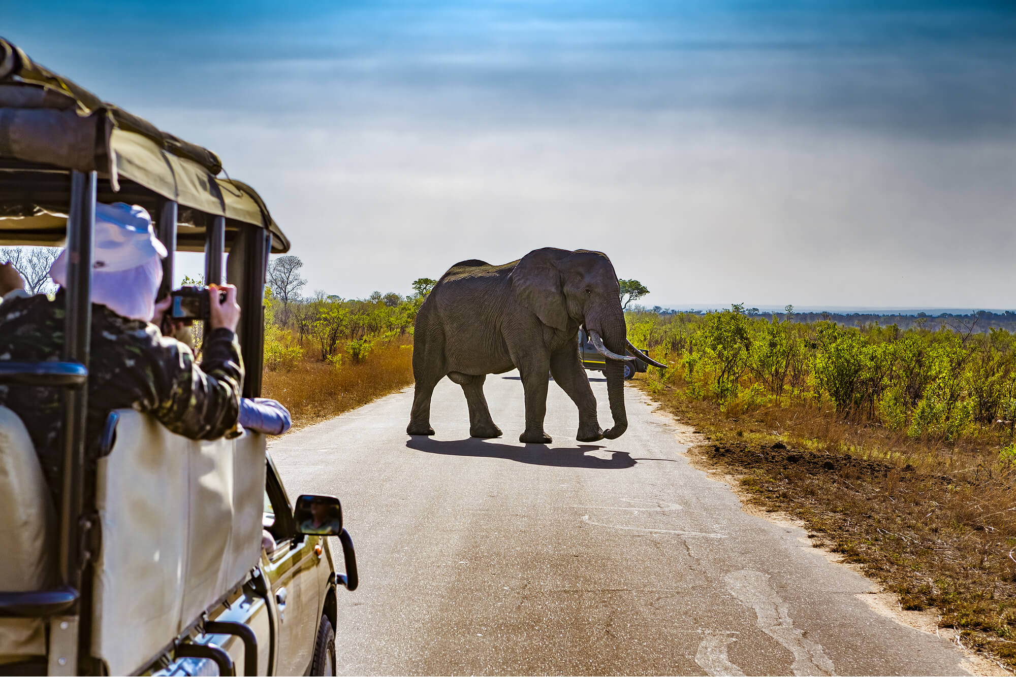 Stop Abuse in the Elephant Tourism