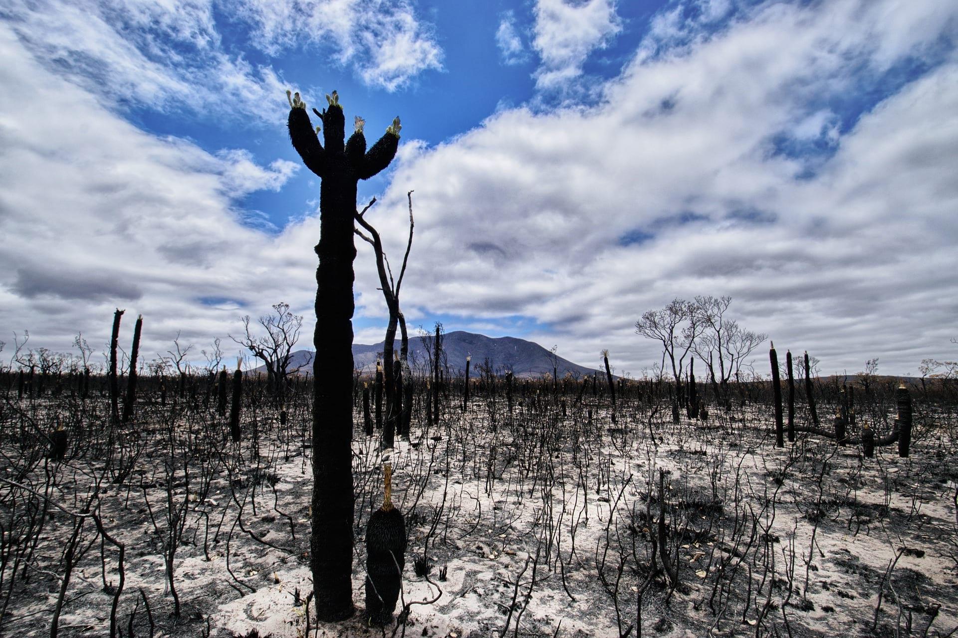A bushfire-razed piece of land in the Australian countryside