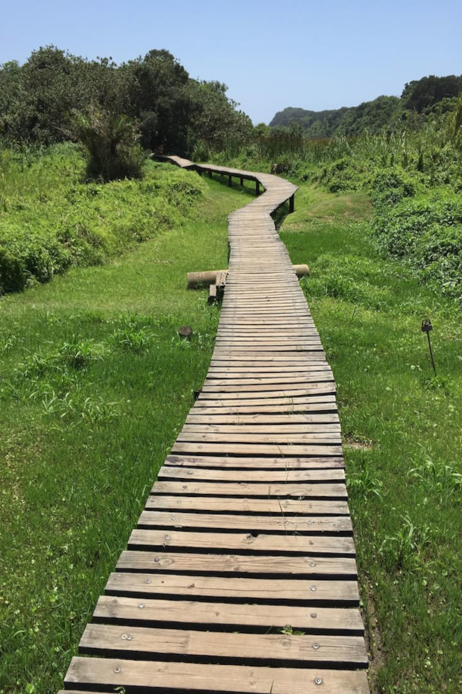 Run along a scenic forested dune trail, Durban