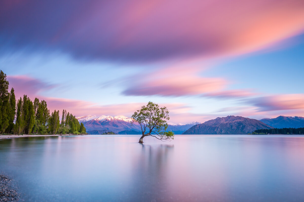 Famous Lake Wanaka tree - famous tourist attraction on a South Island road trip