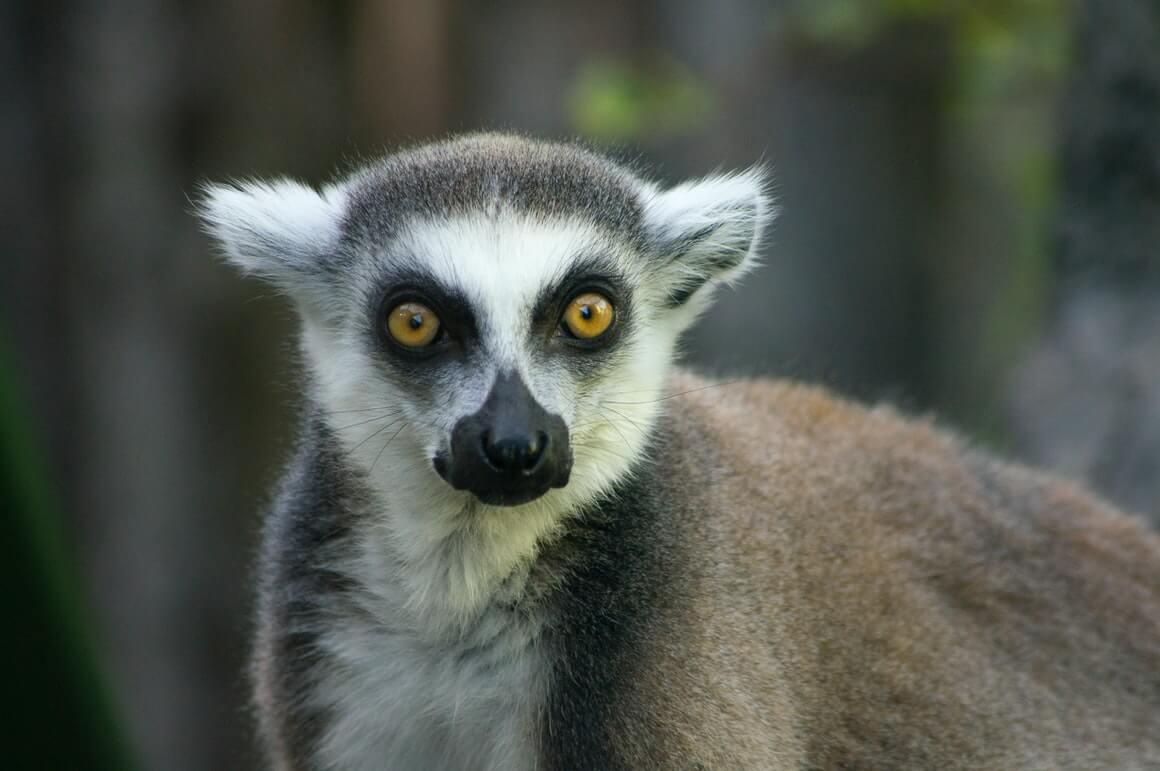 Highlights of Madagascar Plus