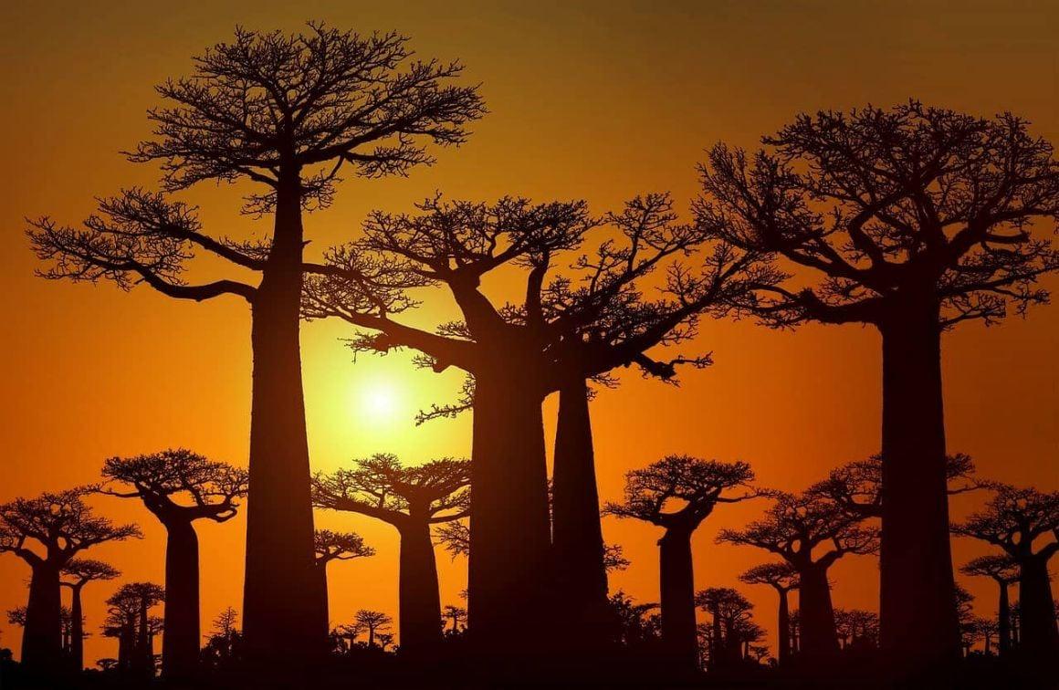 Madagascar Trips