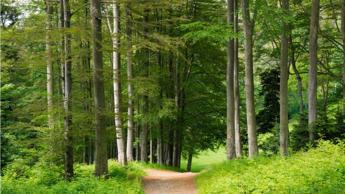 Medvednica Nature Park Loop Off the Beaten Path Trek in Croatia