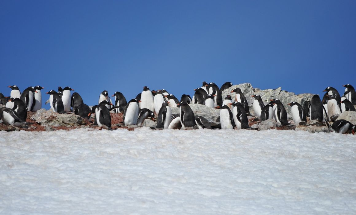 Quick Guide to Visiting Antarctica