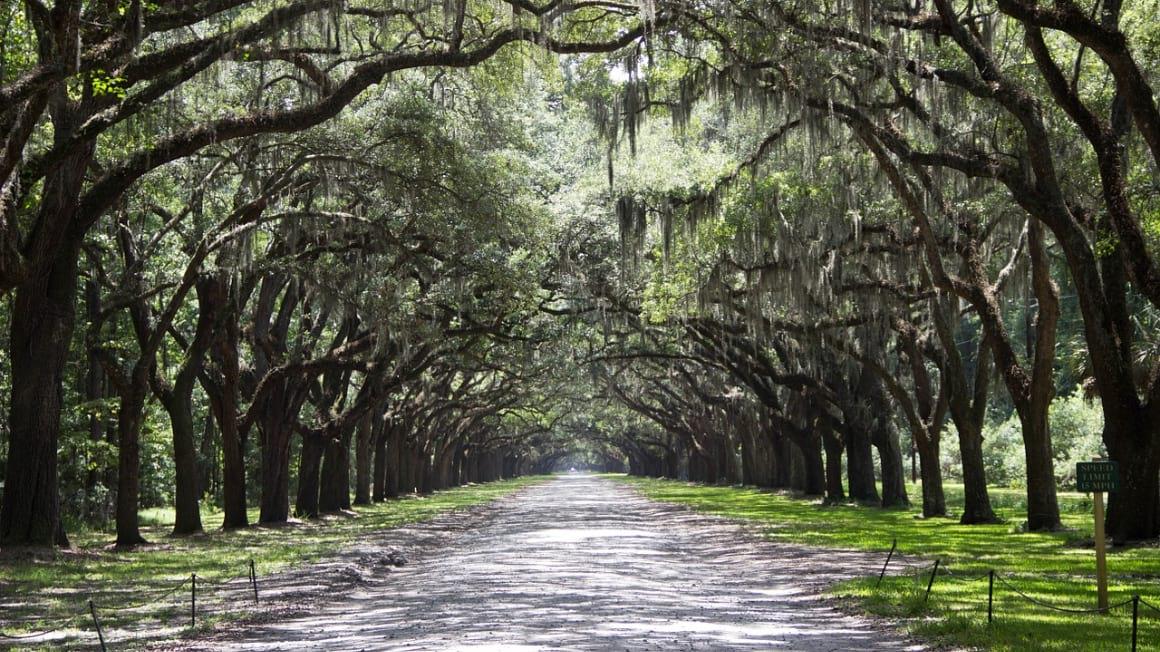 Trees, Savannah