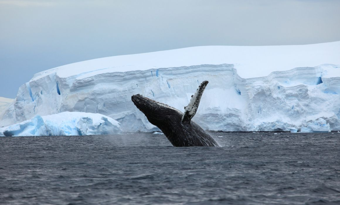 WWF Giants of Antarctica