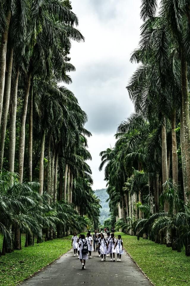 School girls walking amongst palm trees near a beautiful tourist beach in Sri Lanka