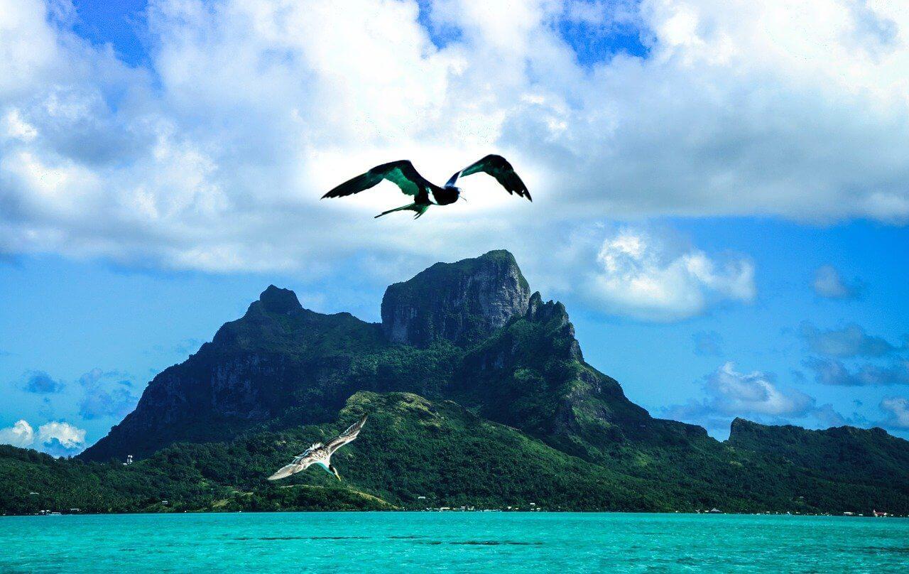 A bird flies in fron of a mountain on the tropical island of Bora Bora