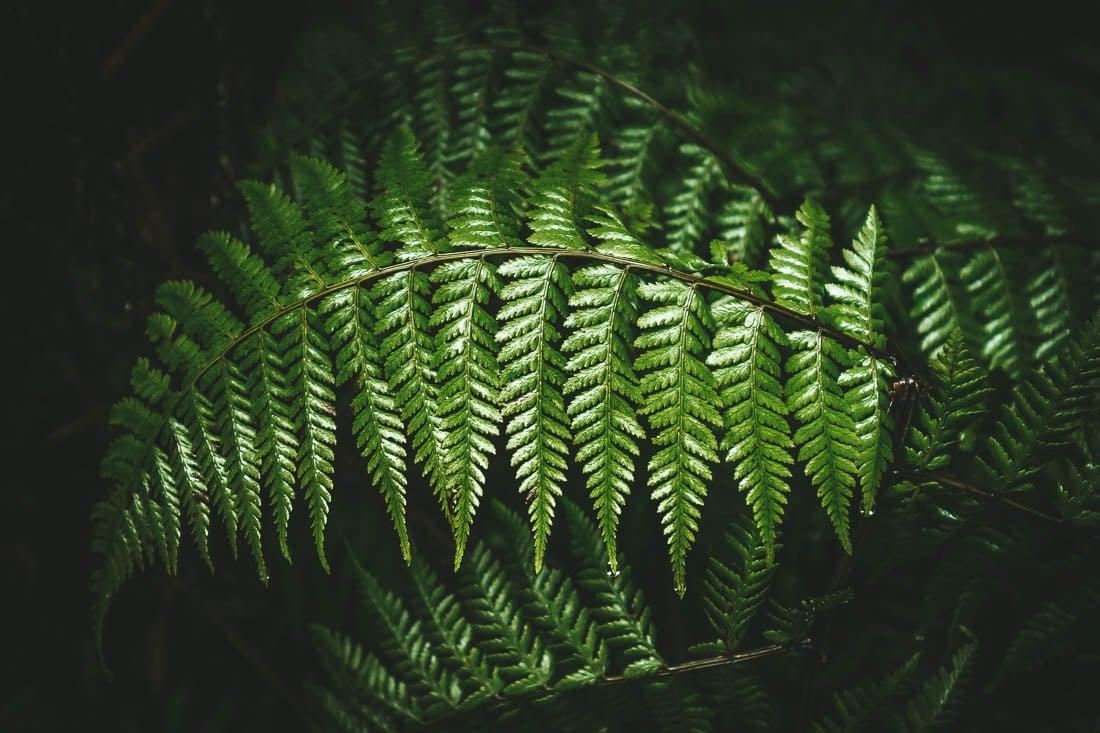 levada do caldeirão verde