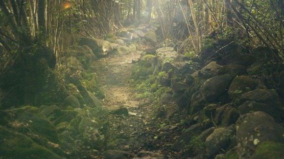 Sendero Bosque Nuboso Trail