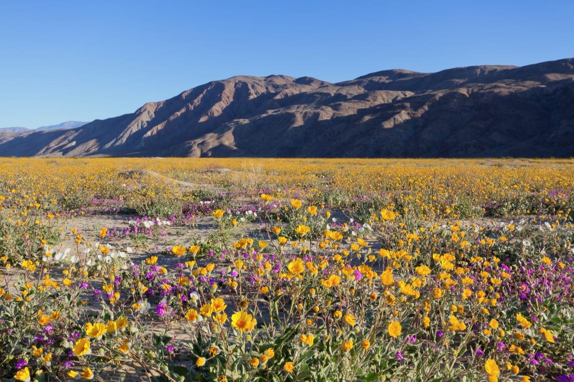 Anza-Borrego Desert State Park, Phoenix