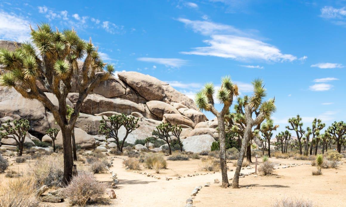 Joshua Tree National Park, Phoenix