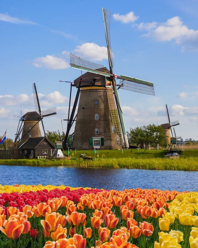 dutch windmills and tulips in the netherlands