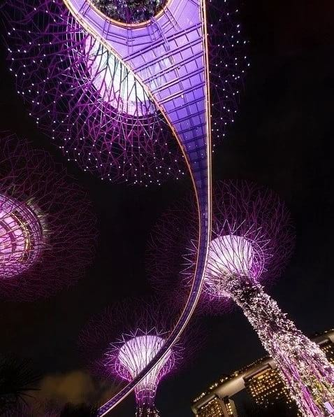 singapore gardens by the bay night