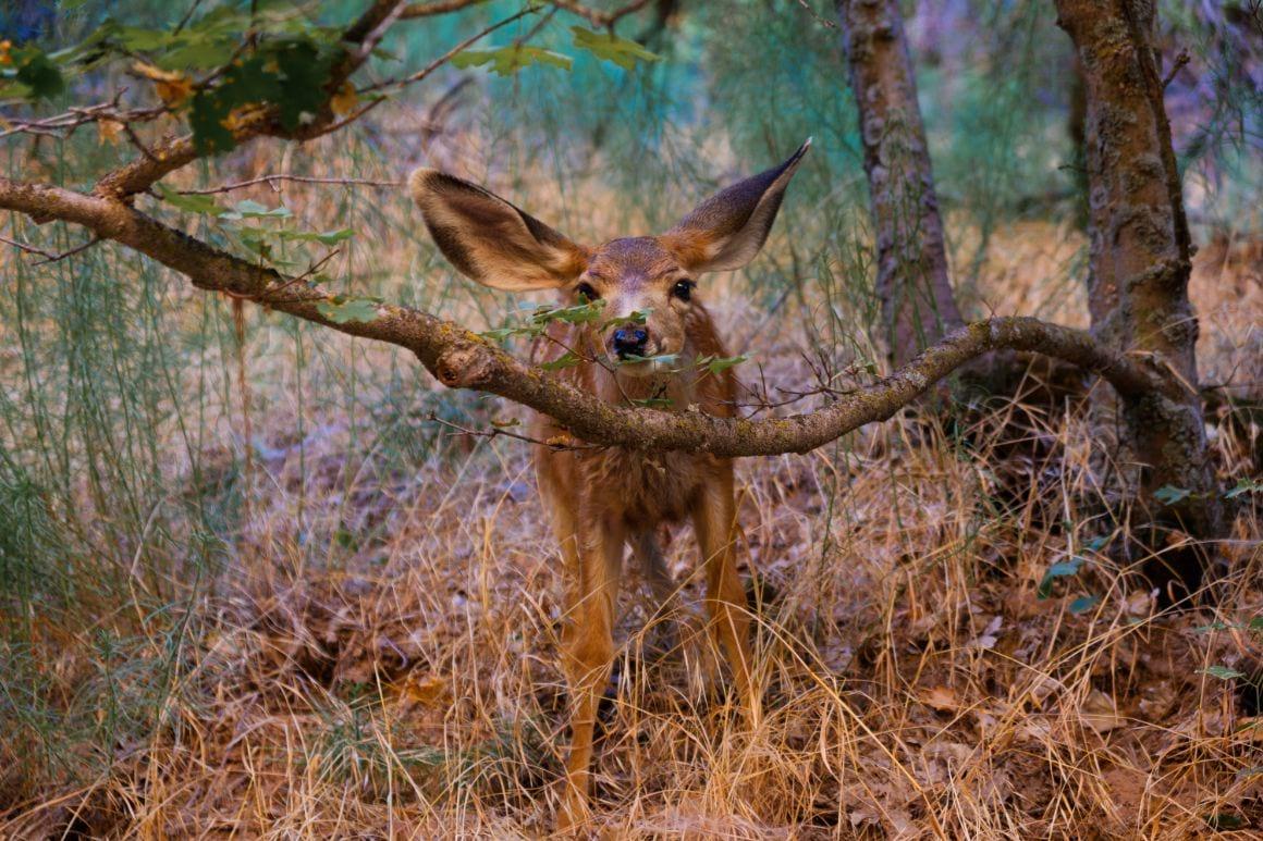 Wildlife at Zion