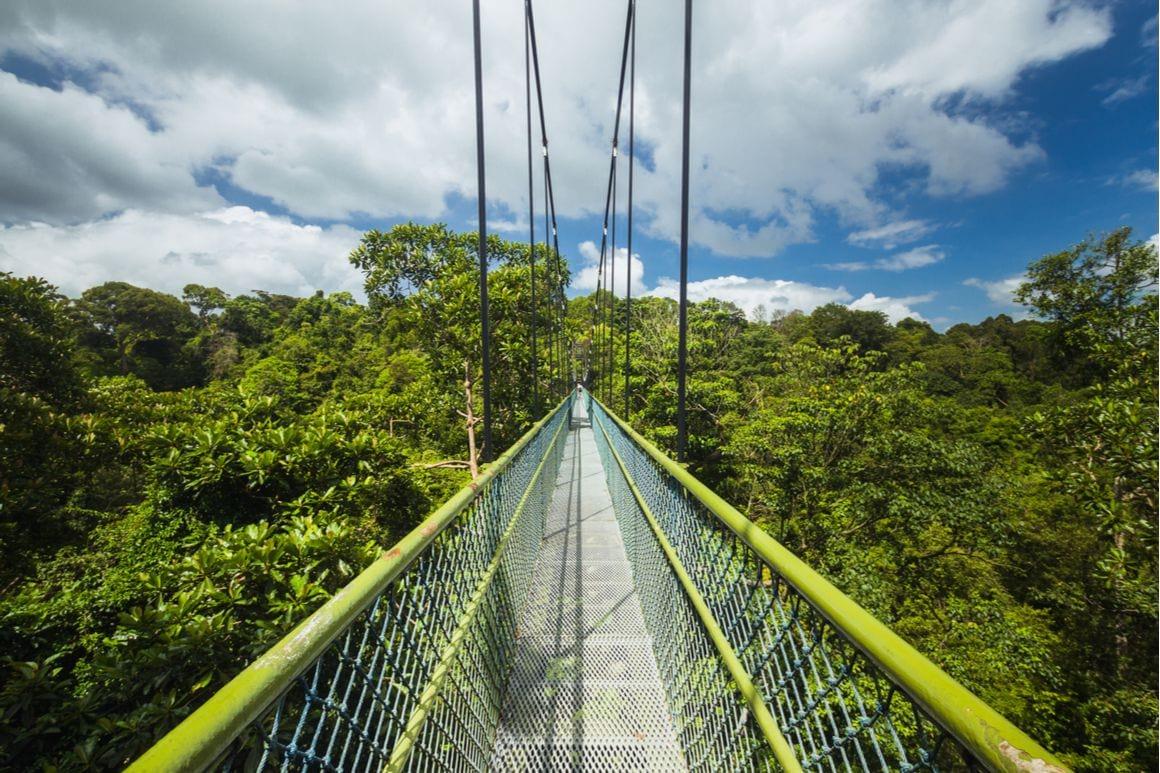 MacRitchie Reservoir Treetop Loop Singapore